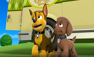 PAW Patrol S01E22 Pups Save the Camping Trip-Pups and the Trouble with Turtles